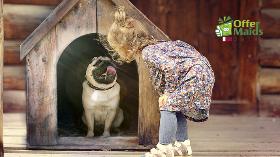 Pet Care Service Qatar